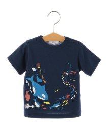 SHIPS KIDS/SHIPS KIDS:SEA&FISH プリント TEE(80~90cm)/500395348